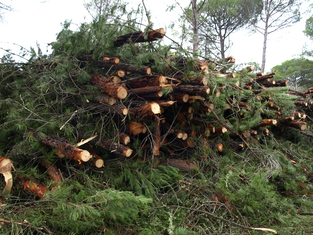 Forest pruning