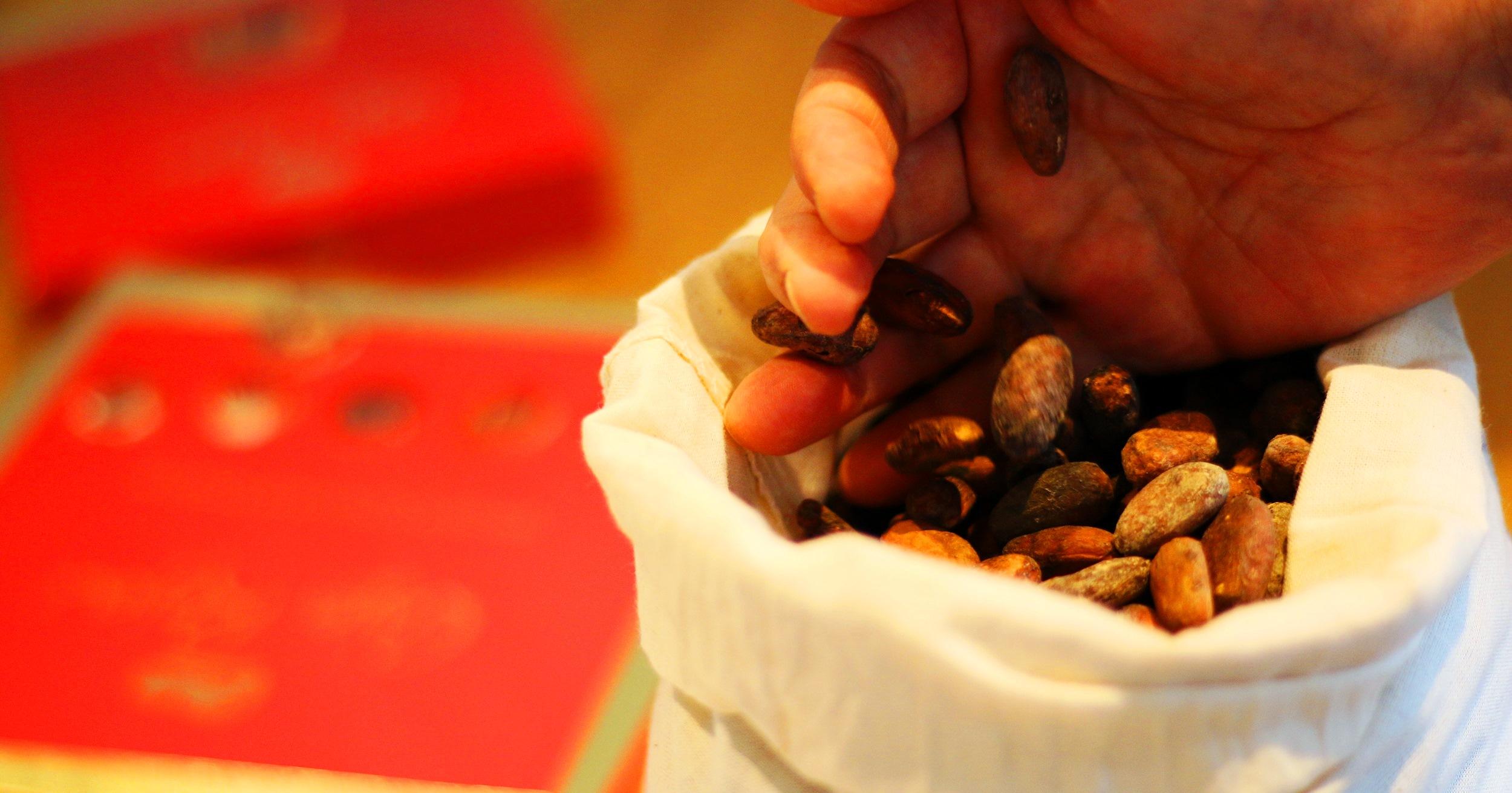 cacao de la biomasse